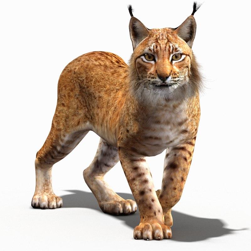3ds lynx eurasian rigging animation
