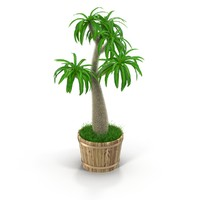 3d pachypodium model
