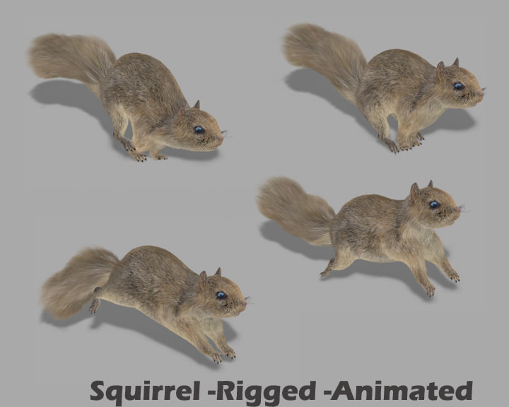 3d squirrel rigged model