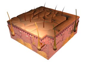 3d skin cells close-up
