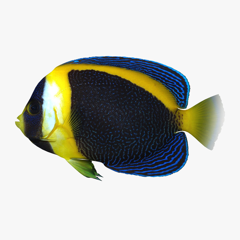 d angelfish 3d 3ds