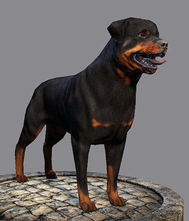 3d model dog rottweiler