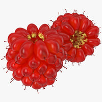 3ds salmonberry berry