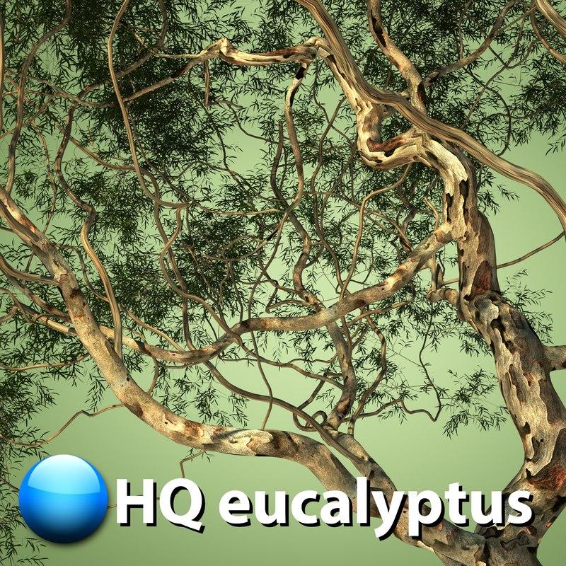 eucalyptus tree hq max