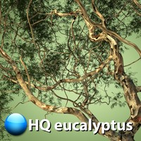 eucalyptus tree hq max