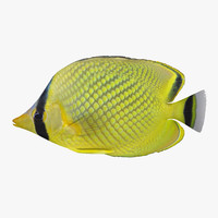 latticed butterflyfish 3d 3ds