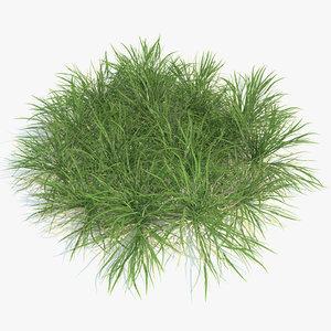 3ds max plants ryegrass english grass lawn
