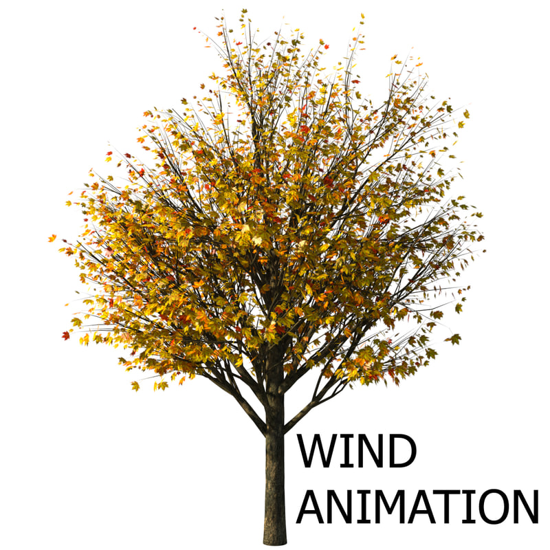 3d model of autumn acer tree animation