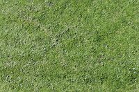 Tex de Kuip Grass Field  Tilable