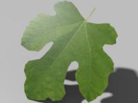 maya green leaf