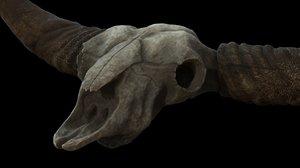 bison skull max