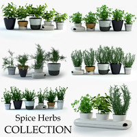 Spice Herbs Collection