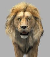 3d lion cat model
