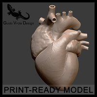 maya accurate printable human heart