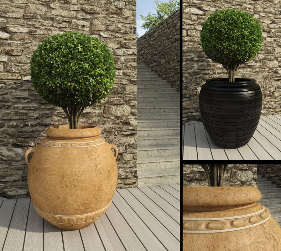 3d boxwood pot