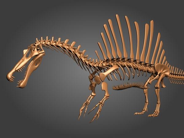 3d new spinosaurus skeleton model