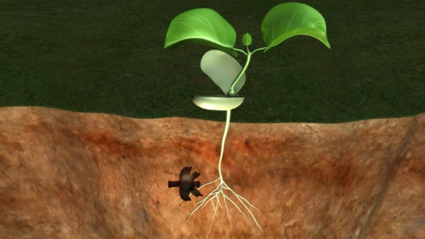 3d model germination seed