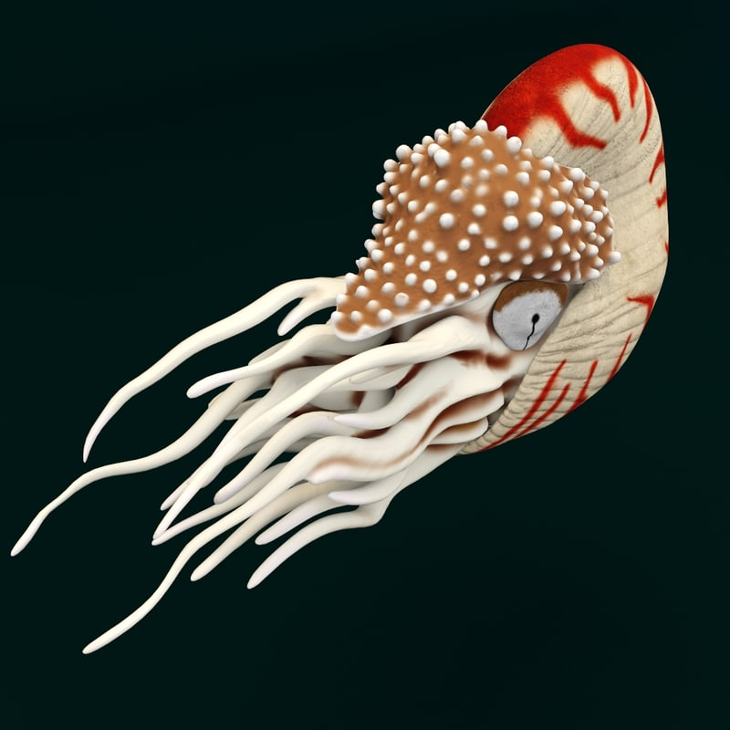 water ocean nautilus 3d model