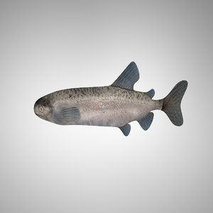 3d model fish altobimedia
