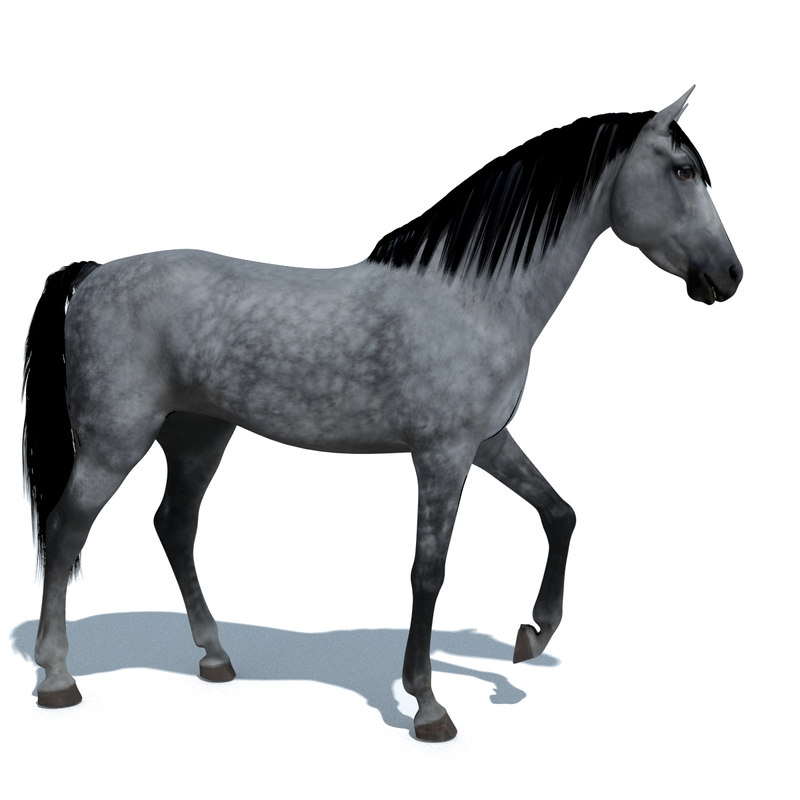 blender horse animations colour 3d 3ds