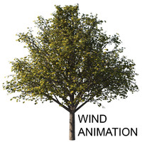 Autumn tree with wind animation