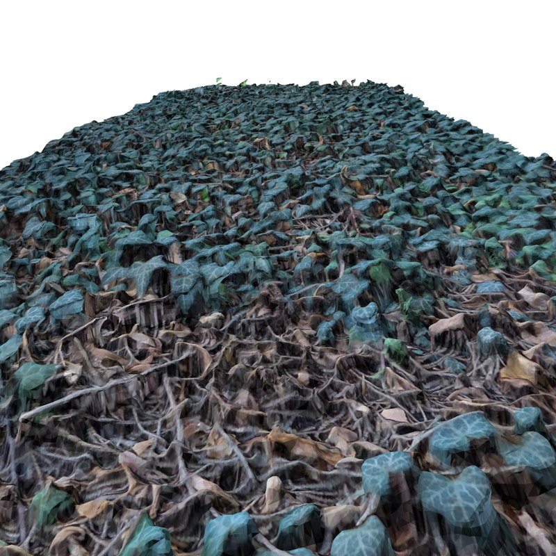 max terrain - ivy 2