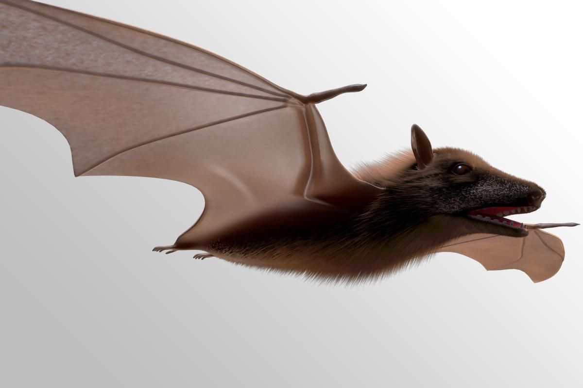 megabat bat c4d