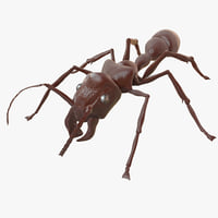 3d model bullet ant rigged