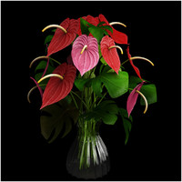 anthurium color max