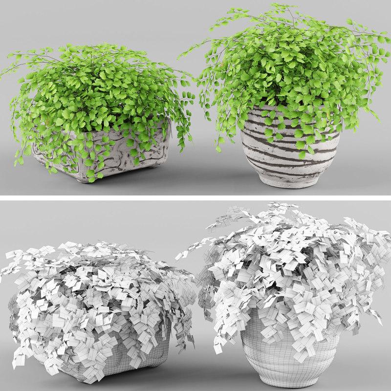 3d adiantum fern model
