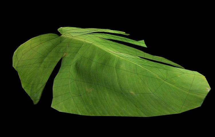 3d tropical plant leaf