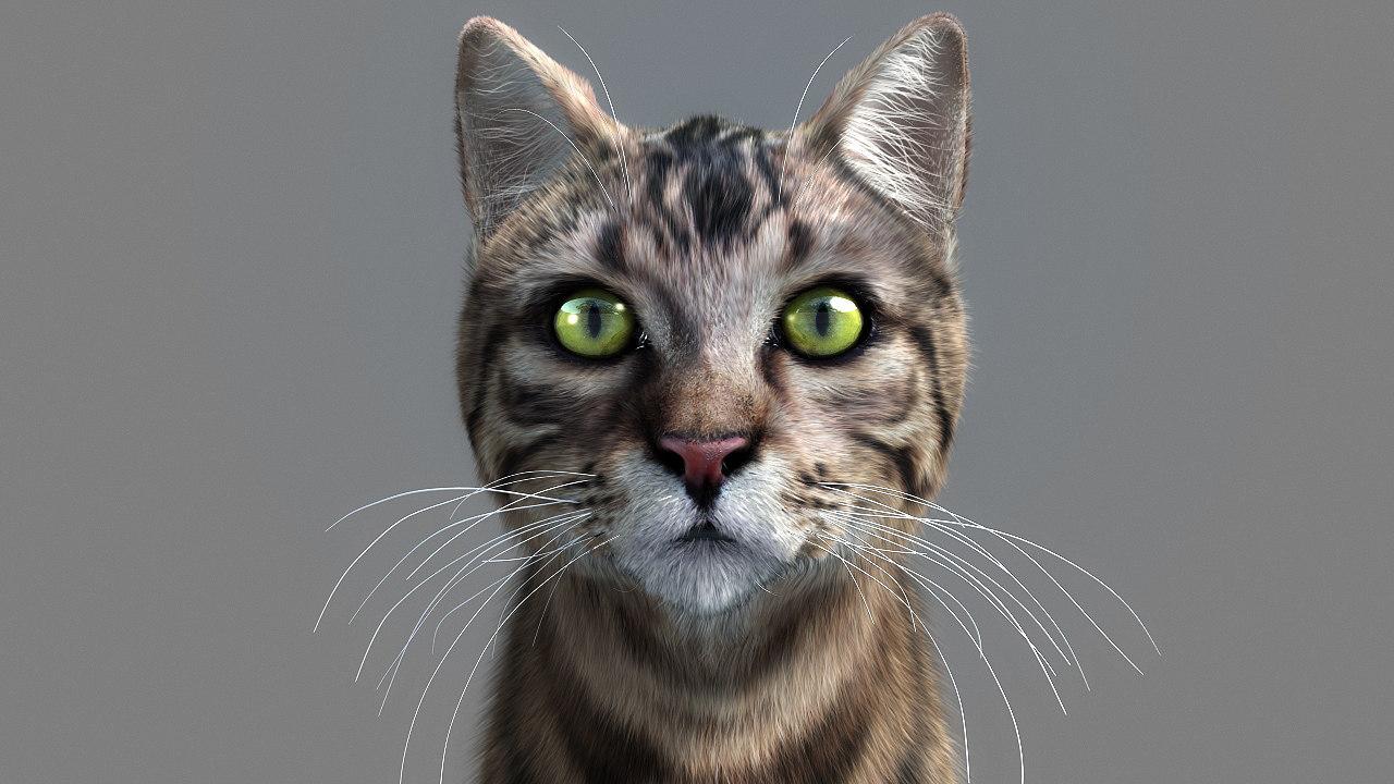 3d max cat hairfarm animation