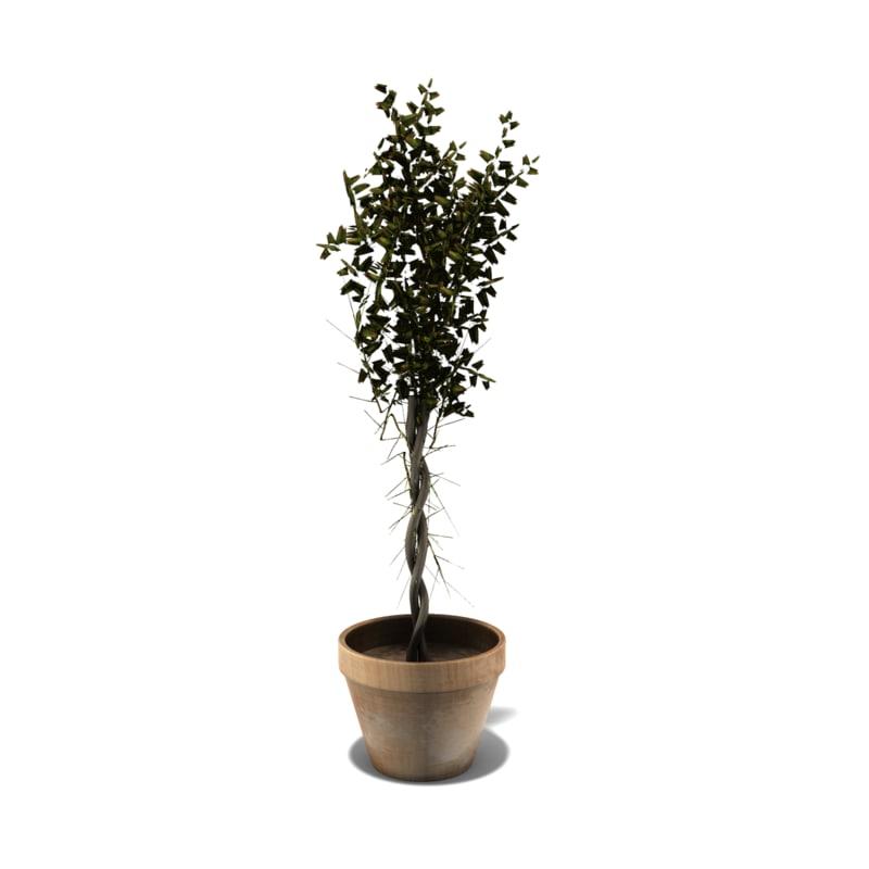 ceramic pot plant 3d ma