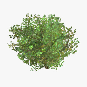 3d plant 03