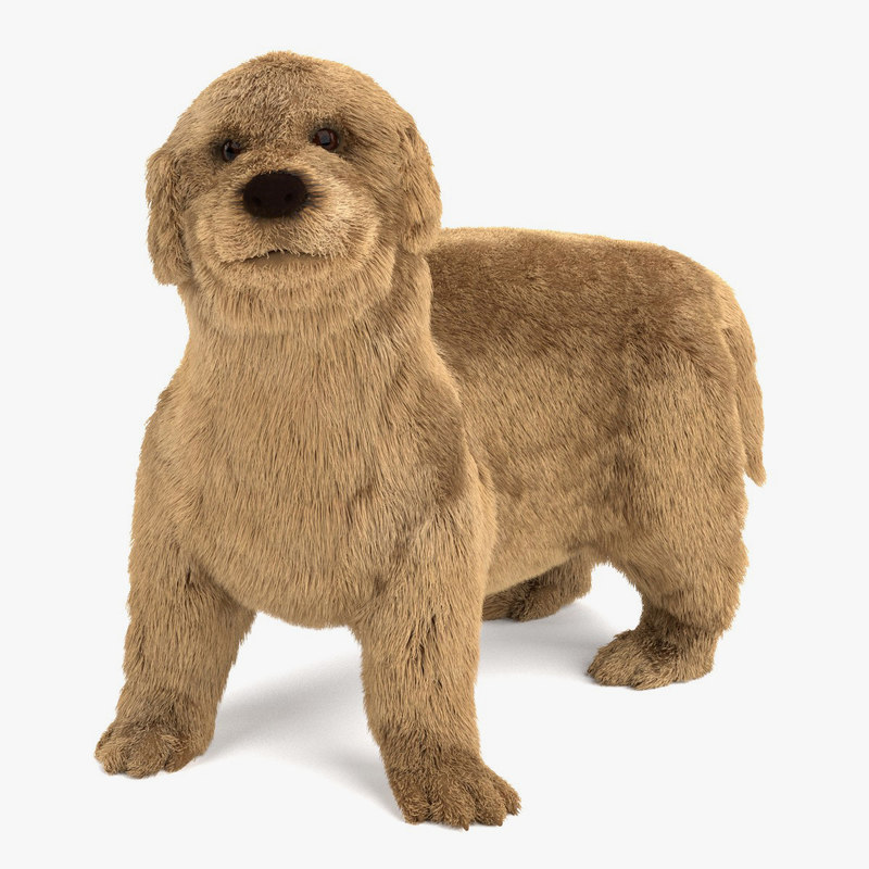 3ds max golden retriever puppy