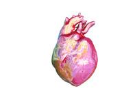 human heart obj