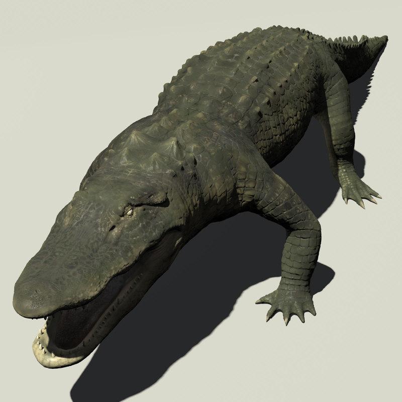 alligator displacement animation 3d model