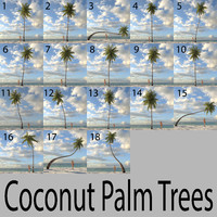 coconut palm trees 3d obj