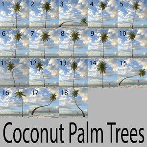 coconut palm trees 3d obj
