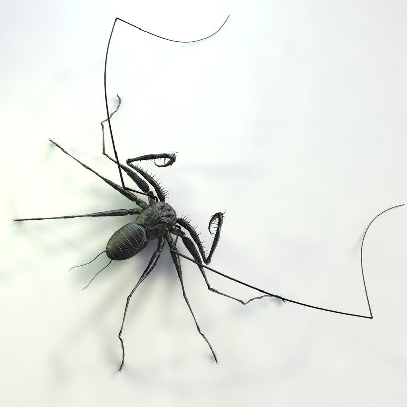 3d model whip scorpion