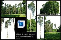 CUT PINE TREE
