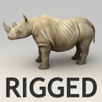 Rhino rigged model