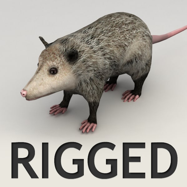 3ds max rigged opossum