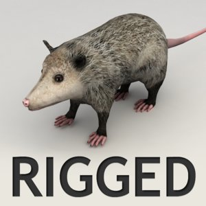 3ds max rigged opossum