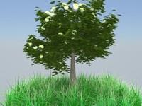 apel tree