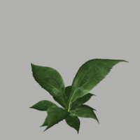 3d model bush 10