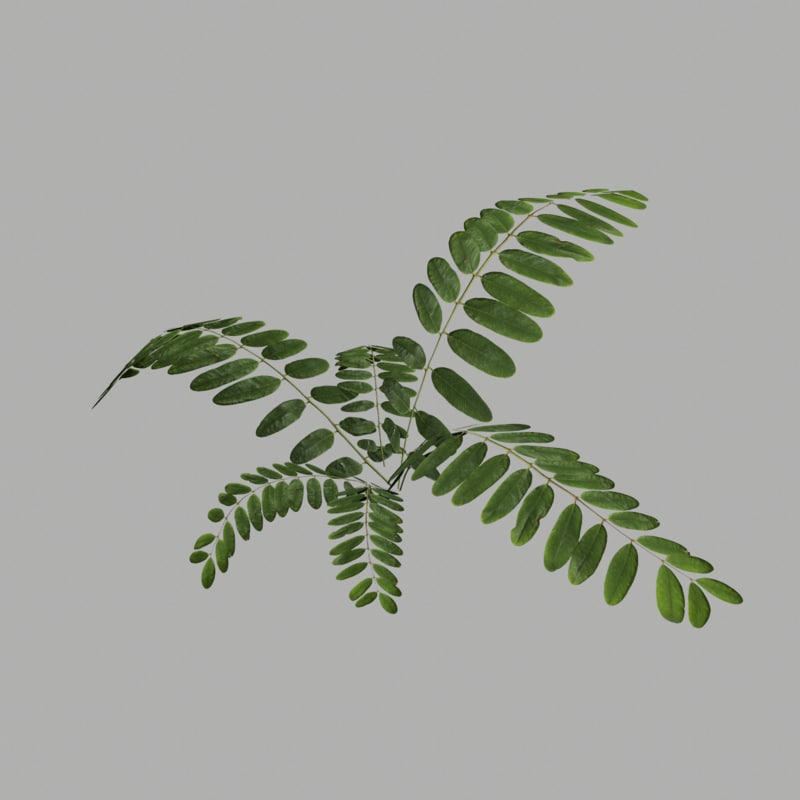 bush 18 3d model