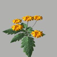 3d flower 5 model