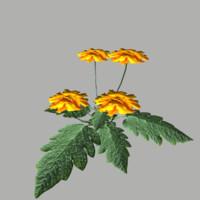 flower 6 3d fbx