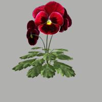 maya flower 12